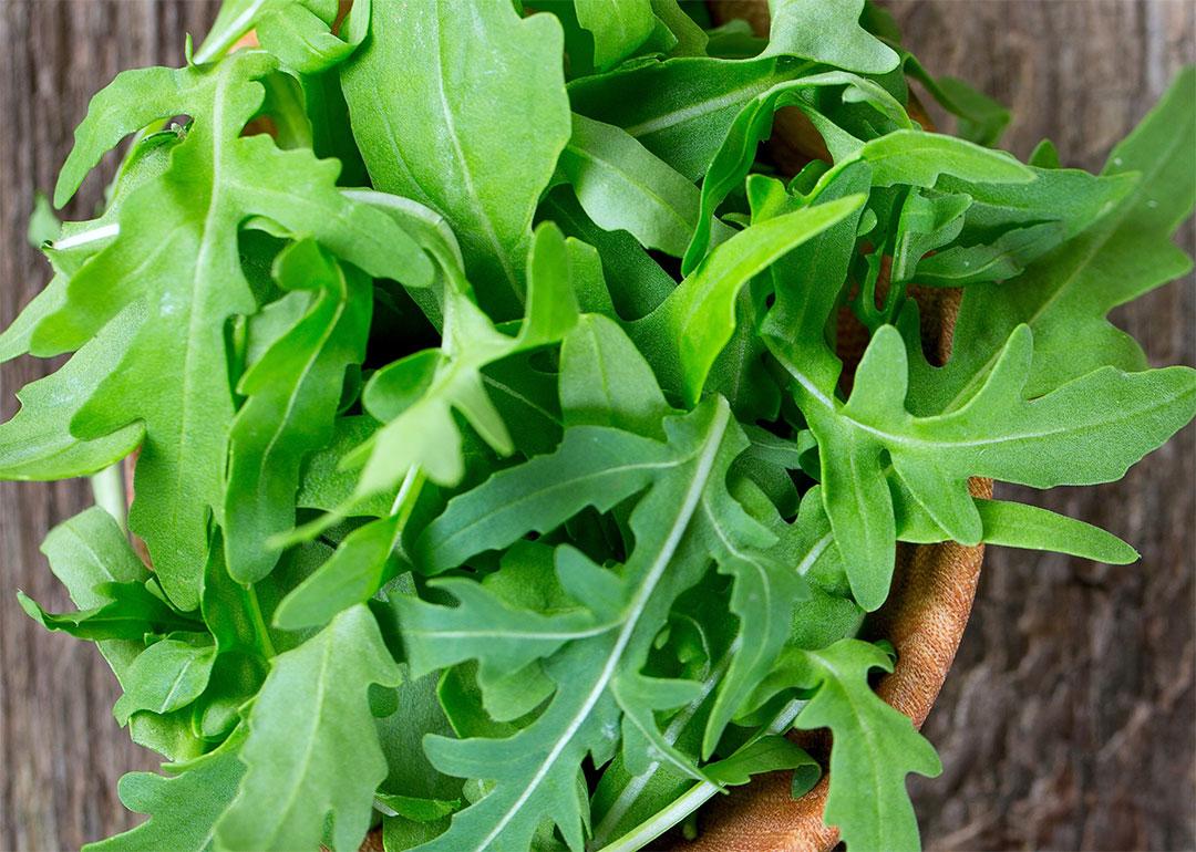 Zoom sur les vari t s de salades - Variete de salade d hiver ...
