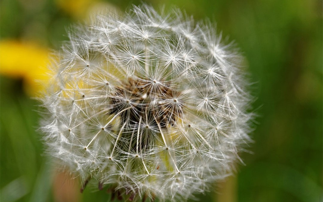 La naturopathie, qu'est-ce que c'est ?