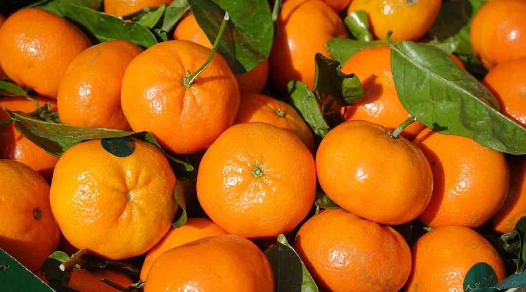 Les fruits et légumes du mois : novembre