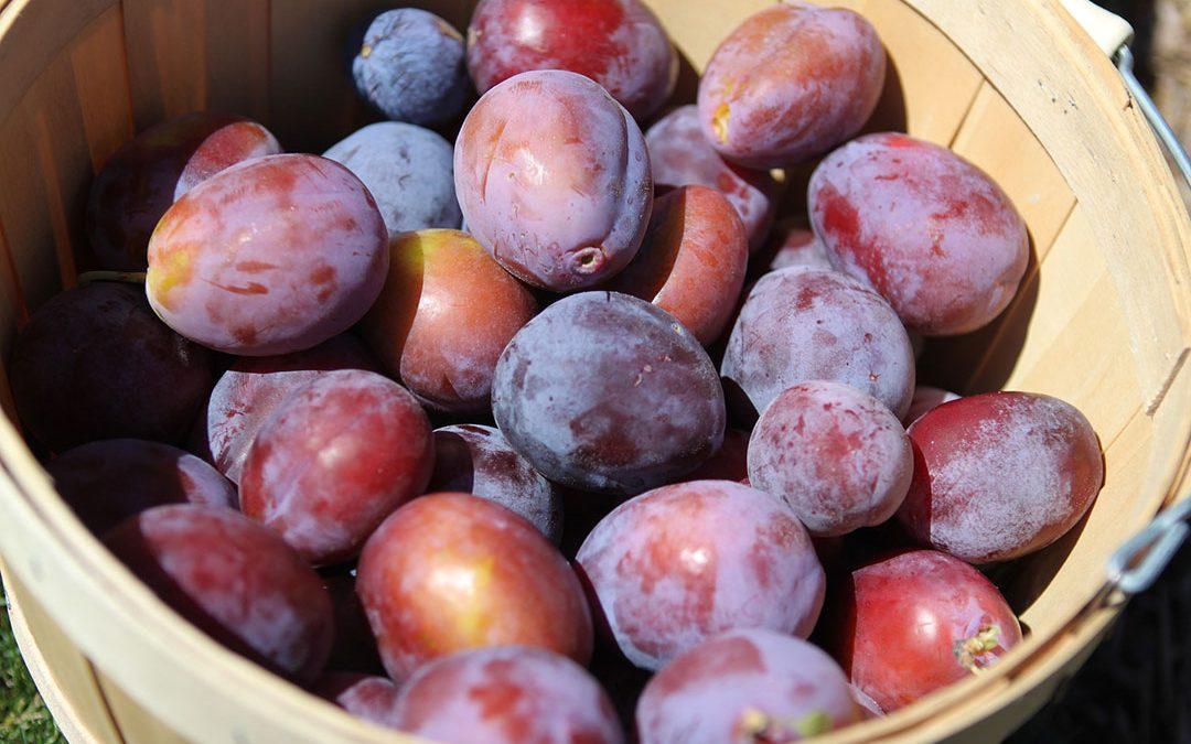 Les fruits et légumes du mois : août