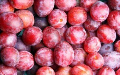 La prune Grenadine, une variété à découvrir !
