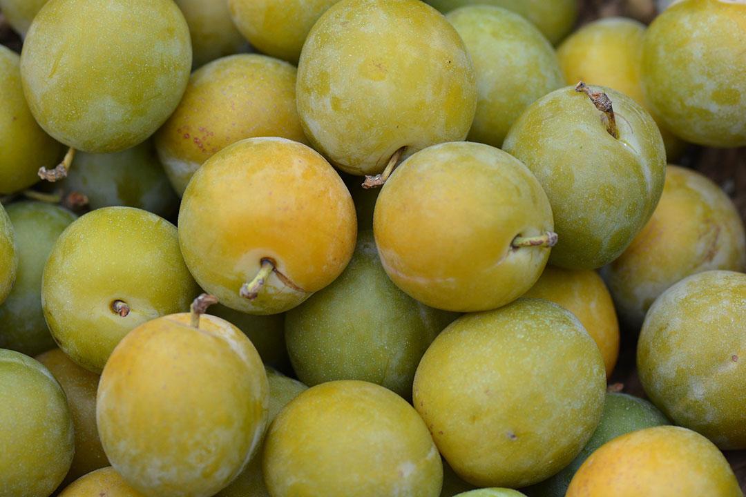 Les fruits et l gumes du mois ao t - Fruits et legumes aout ...