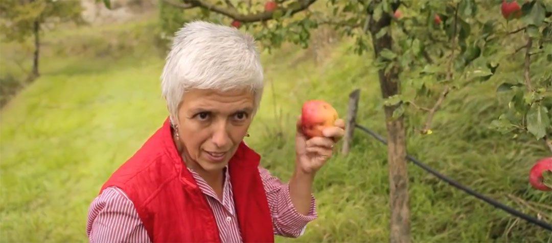Isabella sauve 400 variétés de fruits oubliées