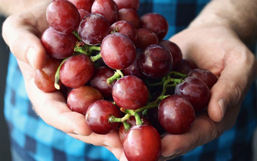Cure de raisin : bienfaits et conseils