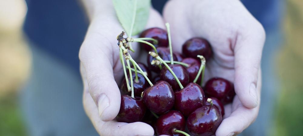 Communiquez avec des fruits